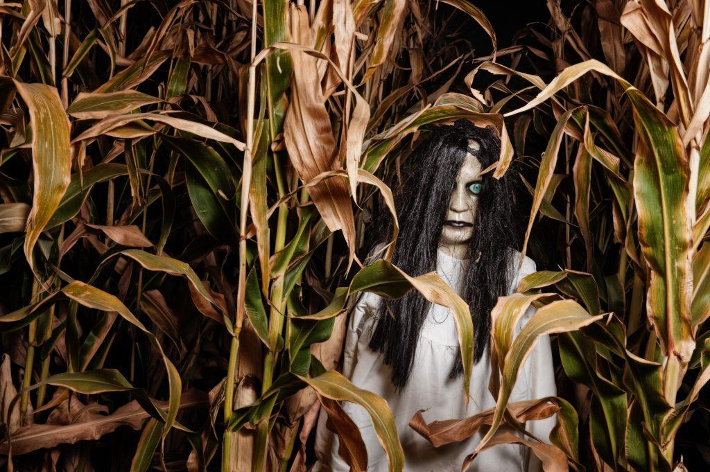 Monster in a Corn Field